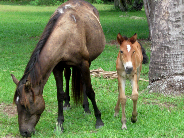 Mare and Colt on Cumberland Island